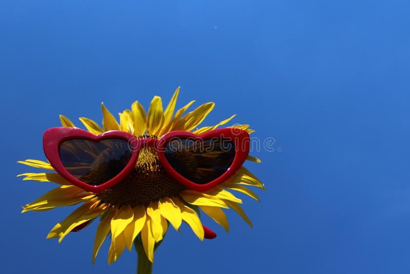 Słonecznik z okularami przeciwsłonecznymi zdjęcia royalty free