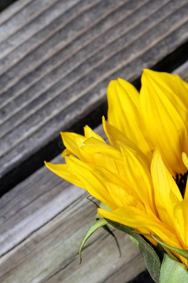 Słonecznik zamknięty up na drewnianym tle zdjęcie stock