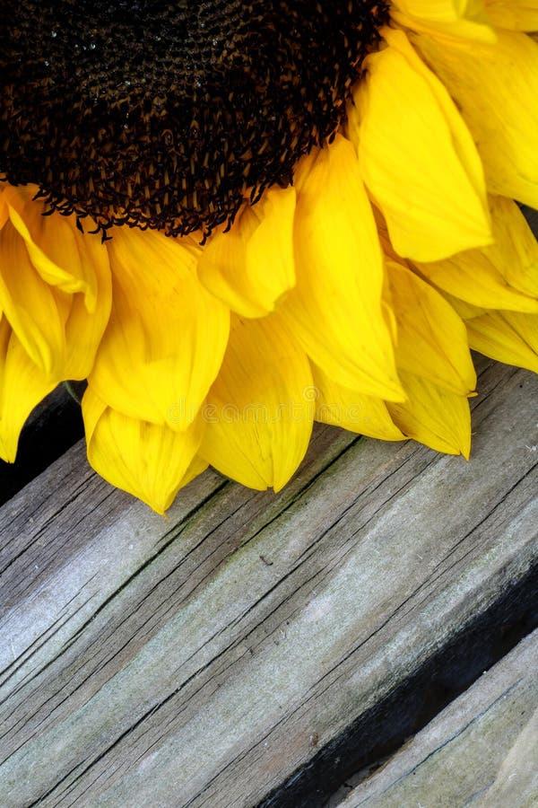 Słonecznik zamknięty z drewnianym tłem up zdjęcia stock
