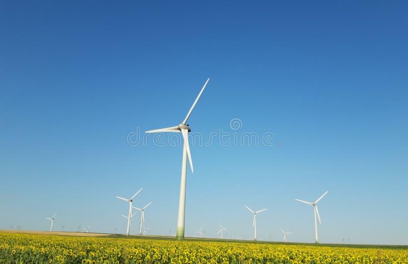 Słonecznika pole z silnikami wiatrowymi wytwarza elektryczność zdjęcie stock