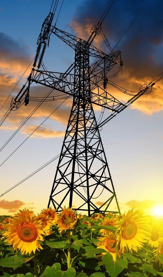 Download Słonecznika Pole Z Wysokim Woltażem Góruje Zdjęcie Stock - Obraz złożonej z równo, krajobraz: 65226488