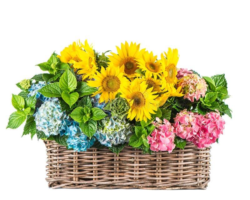 Download Słoneczniki I Hortensia Okwitnięcia Lato Kwitnie W Koszu Obraz Stock - Obraz złożonej z organicznie, botanika: 57672913
