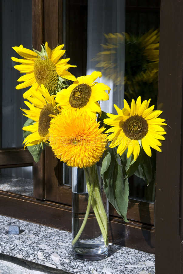 słoneczniki nadokienni zdjęcie stock
