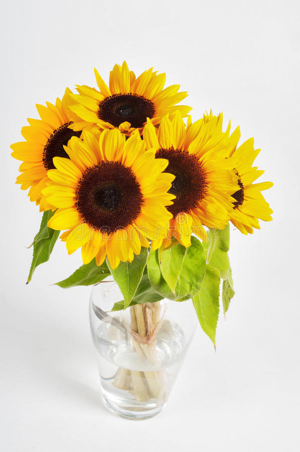 Słoneczniki w szklanej wazie zdjęcie stock