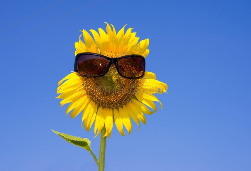 Słonecznikowa uśmiechnięta twarz i okulary przeciwsłoneczni obraz royalty free