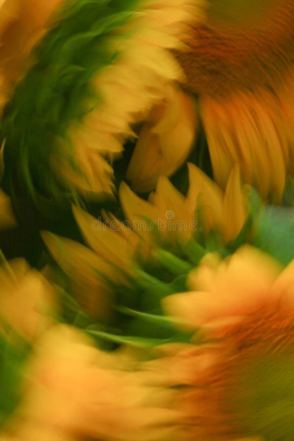 Słonecznikowy Abstrakcjonistyczny projekt fotografia royalty free
