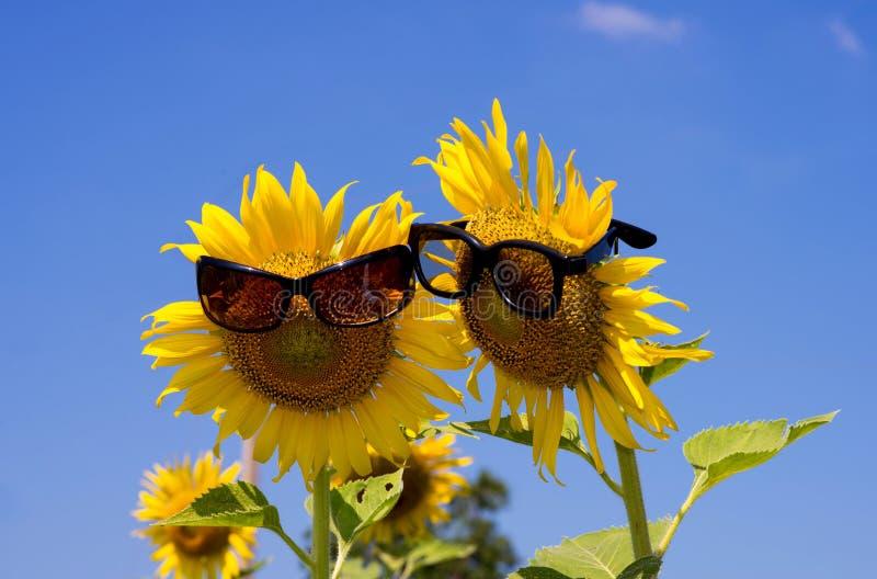 Słonecznikowy inlove z okularami przeciwsłonecznymi obraz stock