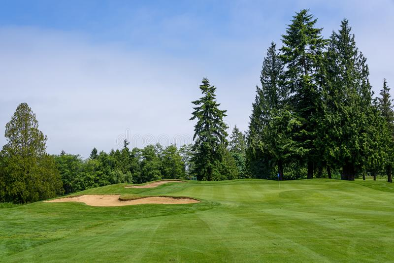 Słoneczny dzień na polu golfowym, farwaterze, zieleni i piaska oklepu otaczającym drzewami, fotografia royalty free
