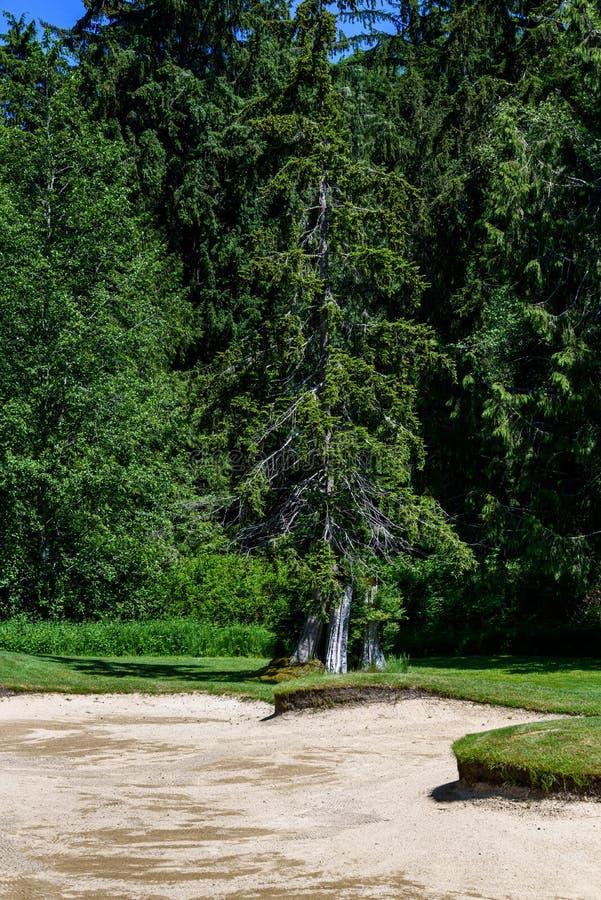 Słoneczny dzień na polu golfowym, piaska oklepiec z lasem w tle zdjęcia royalty free