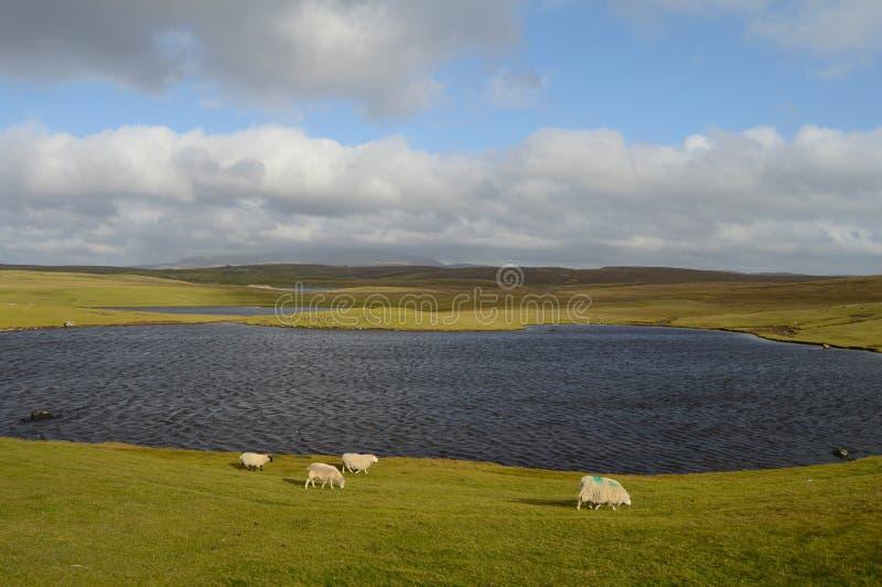 Słoneczny dzień na Shetland wyspach obrazy stock