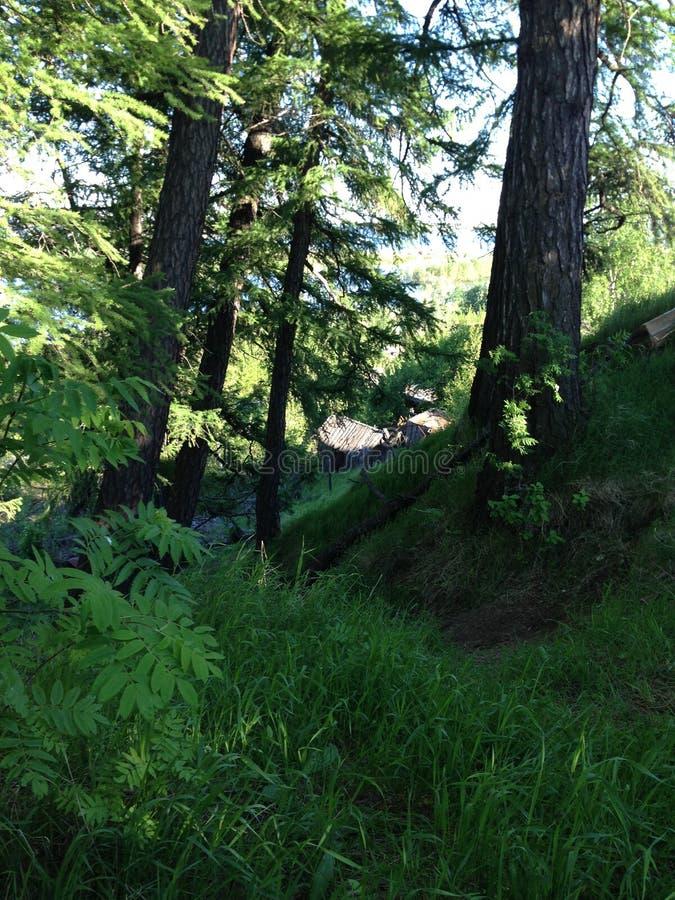 Słoneczny dzień w lesie obraz royalty free