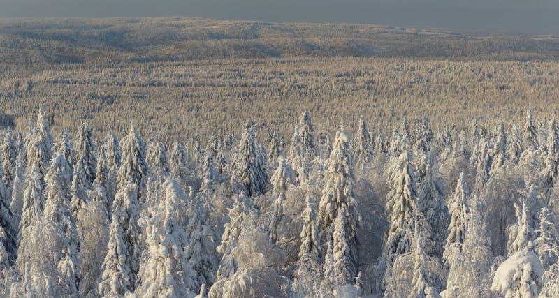 Słoneczny dzień w zima lesie, ural góry, zima las, rosyjski natu fotografia stock