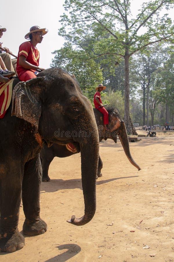 Słoni jeźdzowie oferują turystom przejażdżkę wokoło Bayon & Angkor Thom świątyni zdjęcie stock