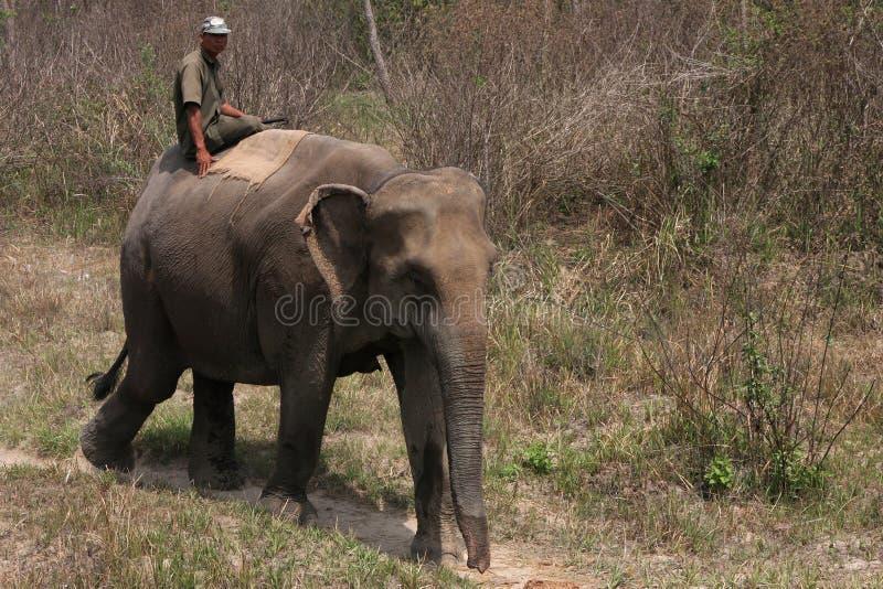 słonia chitwan mahout obraz royalty free