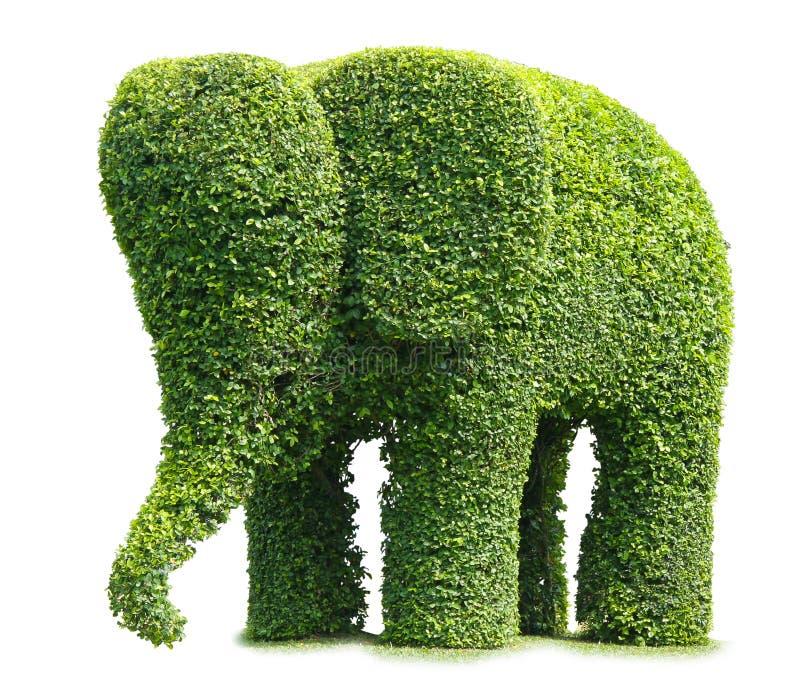 słonia drzewo obraz royalty free