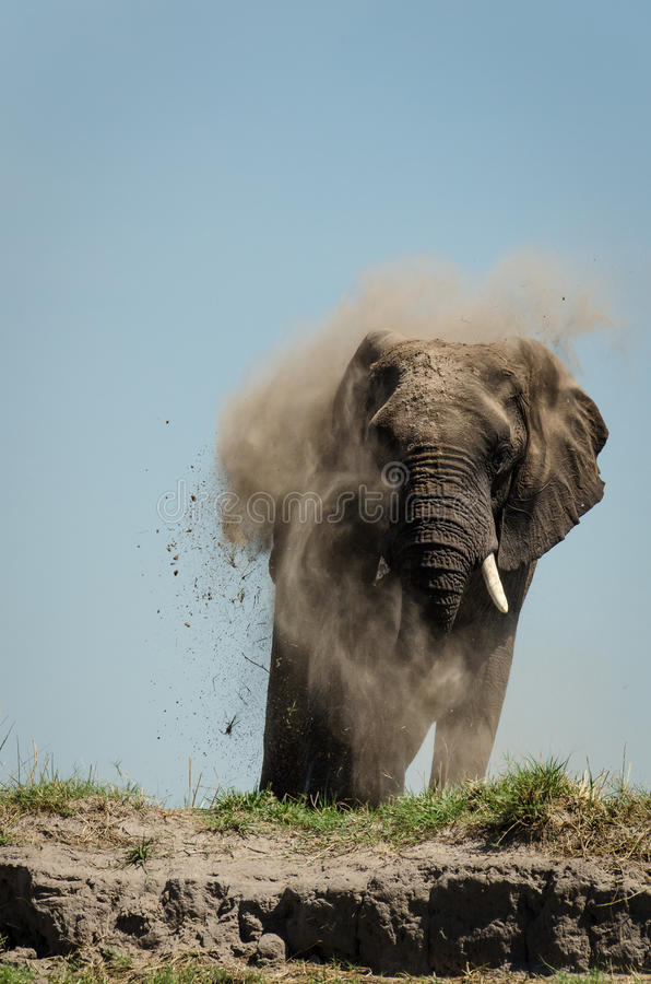 Słonia dustbath fotografia stock
