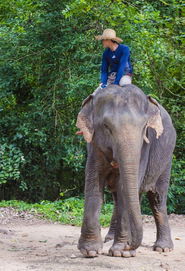 Słonia jeździec w Kambodża zdjęcie stock