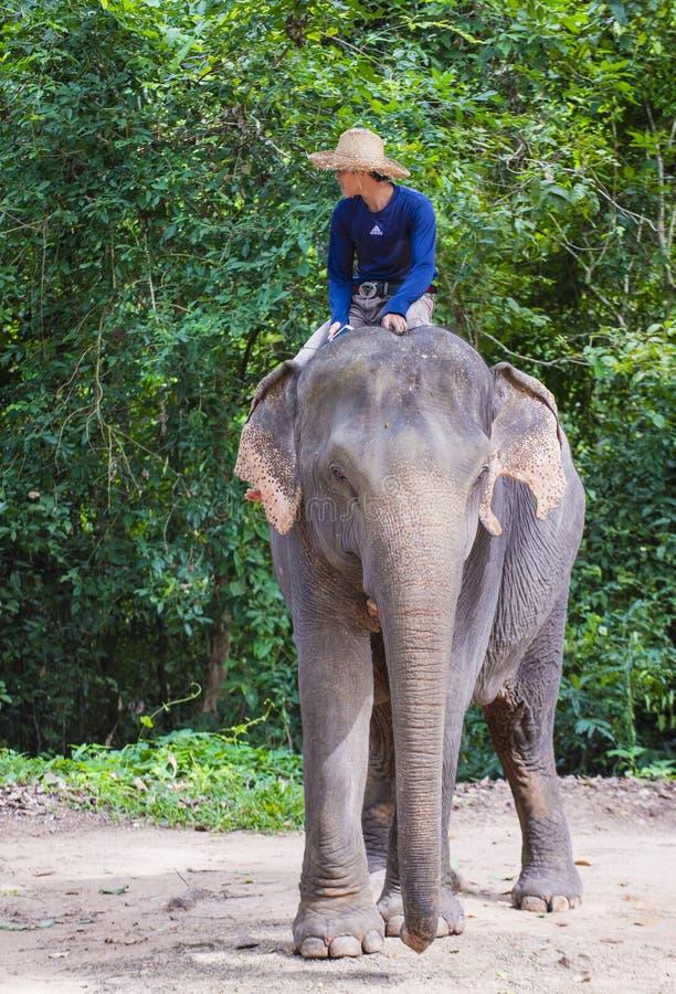 Słonia jeździec w Kambodża zdjęcie royalty free