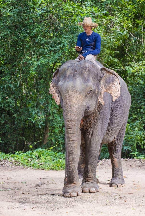 Słonia jeździec w Kambodża fotografia royalty free
