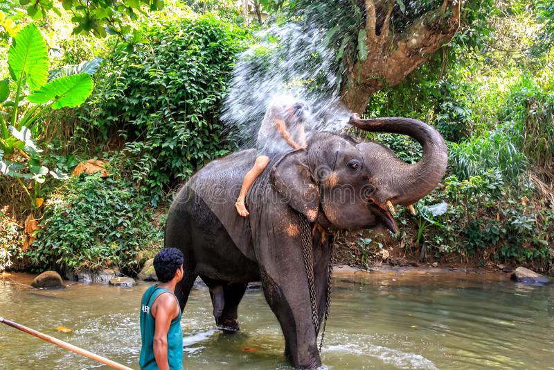 Słonia podlewania turyści podczas gdy pływający w rzece wśród tropikalnego lasu deszczowego obrazy stock
