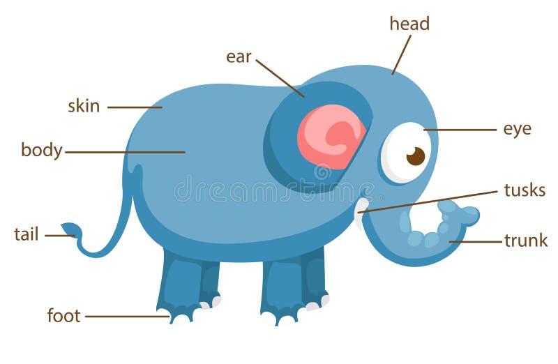 Słonia słownictwa część ciało wektor royalty ilustracja