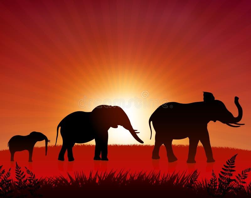 słonie dzicy royalty ilustracja