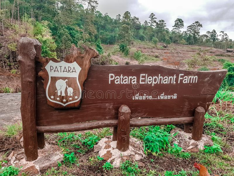 Słonie przy Patara słonia gospodarstwem rolnym, Chiang Mai, Tajlandia zdjęcia royalty free