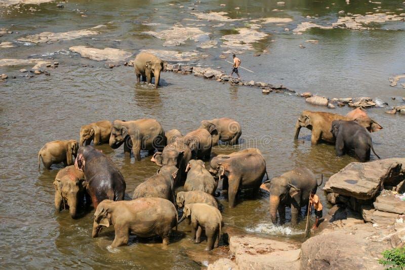 Słonie są kąpać się i myjący w rzece zdjęcie stock