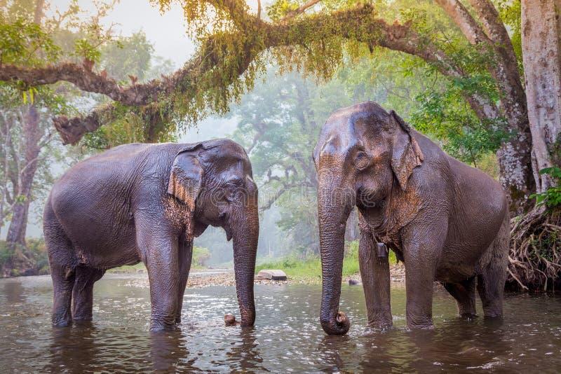 Słonie w Kanjanaburi, Tajlandia zdjęcie royalty free