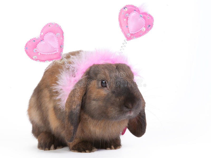 słyszący lop królika obraz stock