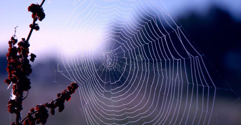 s蜘蛛网 免版税库存图片