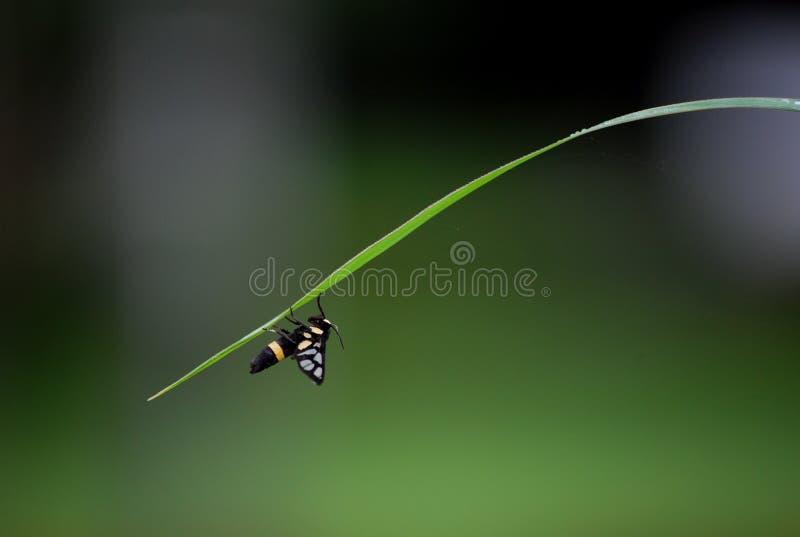 S'élever d'insecte images stock