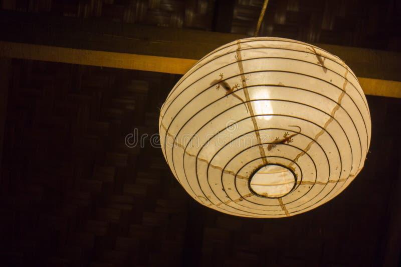 ` S гекконовых в лампе, пробуя уловить некоторых насекомых стоковые фото
