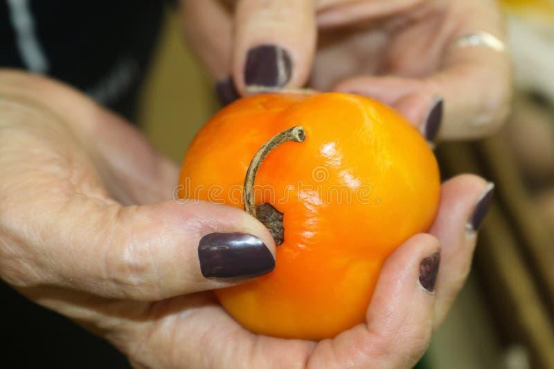 ` S женщины вручает держать оранжевый горячий перец и чувствовать, что его увидело если это любое хорош с запачканной предпосылко стоковые изображения rf