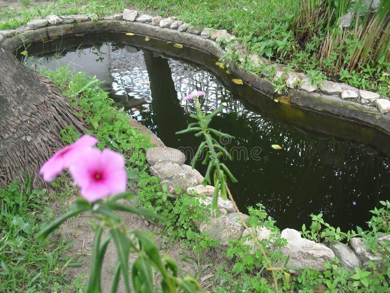 ` S цветка стоковое изображение