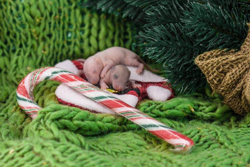 ??` s?? 在新年背景的新生儿鼠 图库摄影