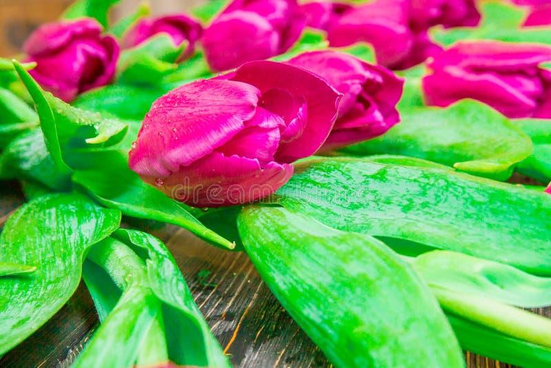 Цветочный узор сделанный розового тюльпана, зеленых листьев, ветвей на черной предпосылке стоковые фотографии rf