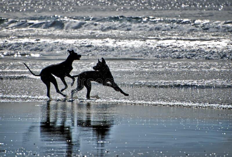 sätta på land hundsilhouettes arkivfoton