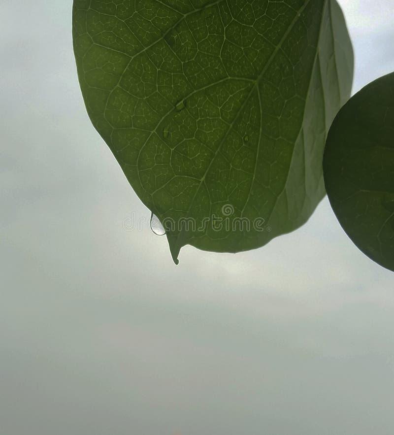 It`s a beautiful rain drop on leaf stock photography