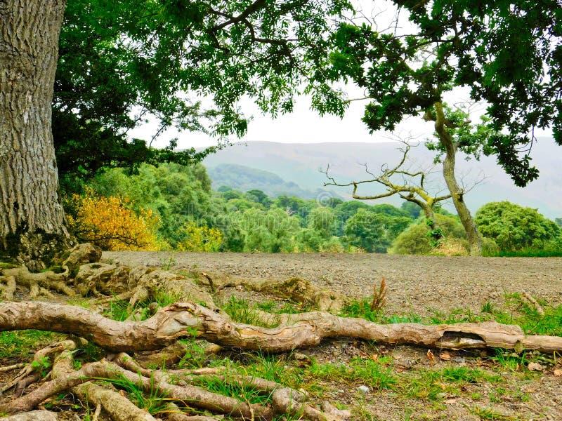 ` S da árvore além do lago fotos de stock