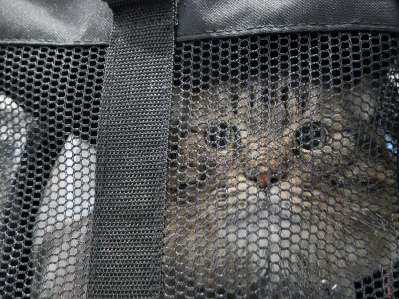 ` S de chat dans le sac photo stock