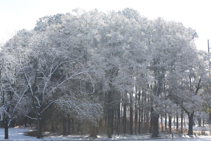 ` S di Georgia Tree coperto in neve fotografie stock libere da diritti