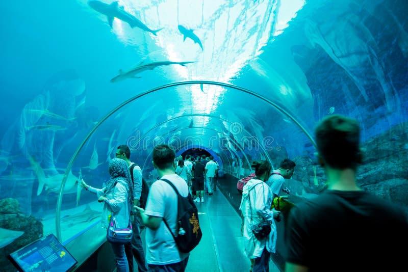 S e A Aquarium, Singapore royalty-vrije stock fotografie