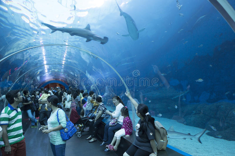 S.E.A. Aquarium in Singapore. The S.E.A. Aquarium (South East Asia Aquarium) is second largest in the world. It contains a total of 45,000,000 litres of water stock photos
