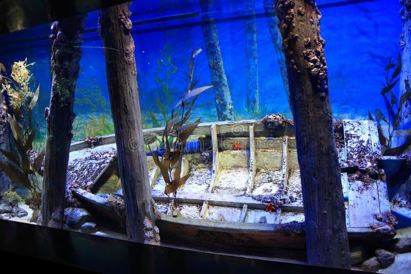 S E Un acquario Singapore immagine stock