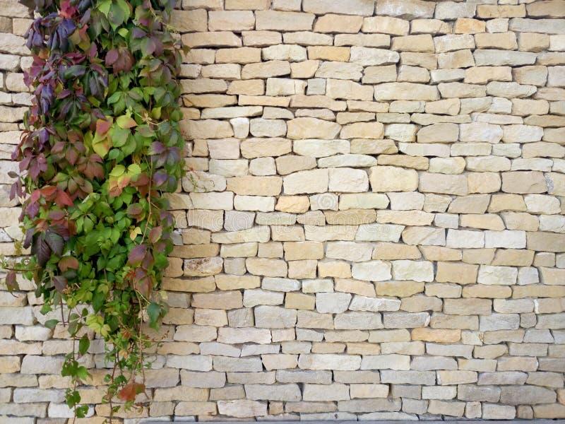 S'embranche l'usine décorative sur le mur de briques Branches vertes sur la texture de mur en pierre photographie stock libre de droits