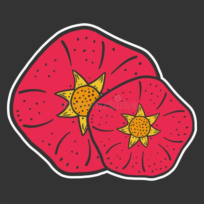 S??er reifer Granatapfel Vektorkonzept in der Gekritzel- und Skizzenart lizenzfreie abbildung