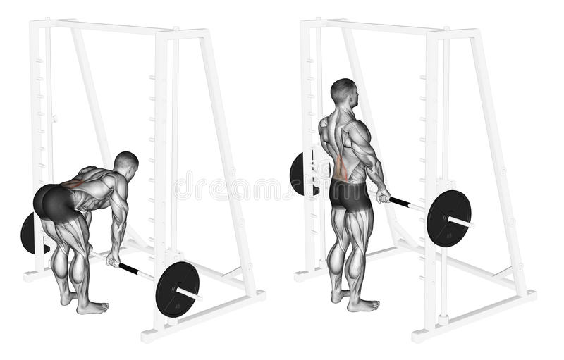 s'exercer Ascenseurs de morts de Smith Machine illustration libre de droits
