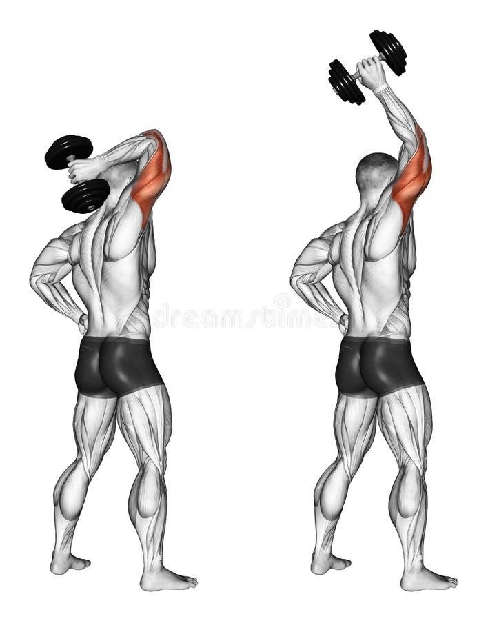 s'exercer Extension d'une main avec une haltère par derrière la tête illustration stock