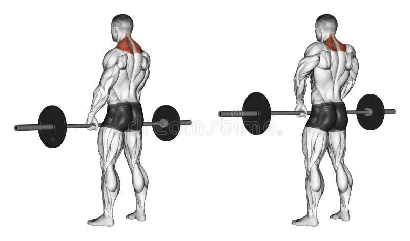 s'exercer Haussements d'épaules avec le barbell illustration stock